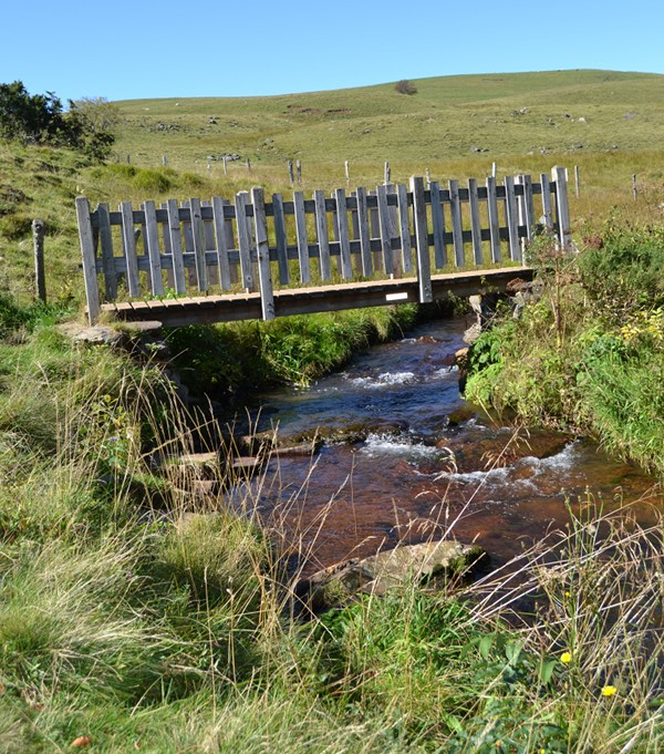 Boardwalk Neuffonds stream